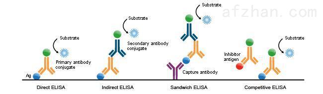 大鼠50补体溶血单位elisa检测试剂盒