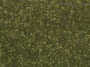人膀胱移行細胞癌細(UM-UC-3)