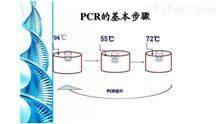 马疱疹病毒1型PCR检测试剂盒直销
