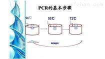 古典豬瘟病毒PCR檢測試劑盒科研用