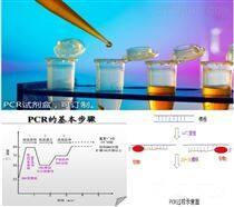 水稻內源基因SPS 核酸檢測試劑盒說明書