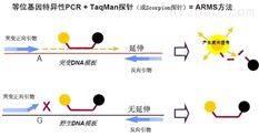 RT-PCR試劑盒