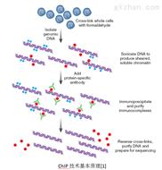 染色質免疫共沉淀技術