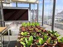 蜂窩物聯校園智慧農業研學基地建設方案