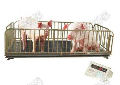 猪场称猪的地磅称